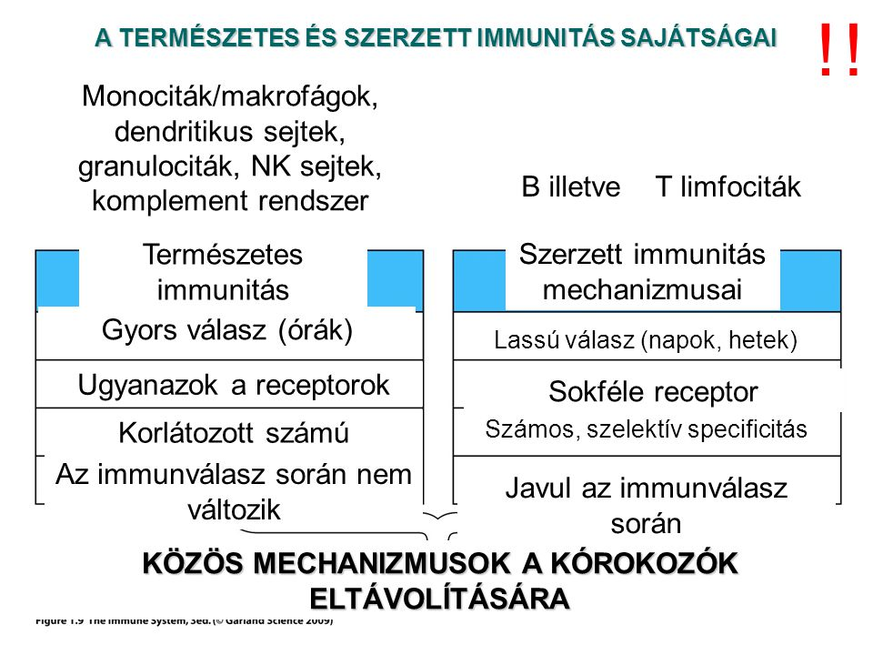 A FELISMERÉS NEM ELKERÜLHETŐ TERMÉSZETES (VELESZÜLETETT) IMMUNITÁS felismerő mechanizmusa .