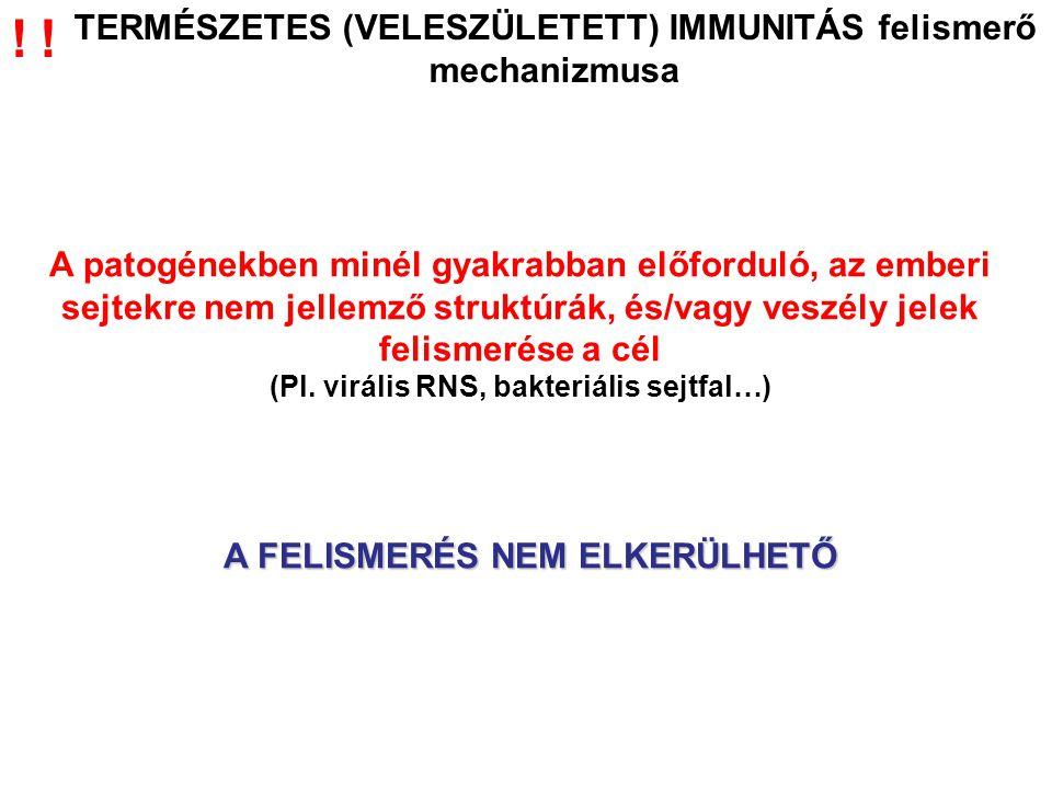 A szerezett immunrendszer antigén felismerése 1.