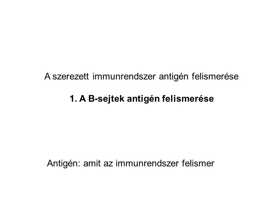 AZ ELLENANYAGOK (antitest, immunglobulin) SZERKEZETE Könnyű lánc (L) Nehéz lánc (H) VL CL VH CH Szimmetrikus molekula  két azonos könnyű lánc, két azonos nehéz lánc Konstants (C) és variábilis (V) domének A variábilis domének felelősek az antigén felismerésért (nehéz és künnyű lánc együtt) A nehéz lánc konstans doménjei az effektor funkciókért .