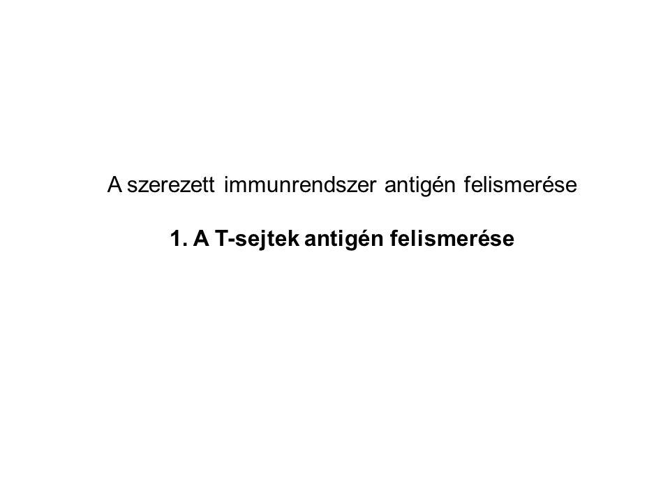 T sejtek feladatai az immunválasz során: 1.A CD8+ citotoxikus T sejtek elpusztítják a korokozókkal fertőzött, vagy tumoros sejteket 2.A CD4+ segítő (TH) sejtek az immunválasz többi szereplőjét aktiválják, irányítják.