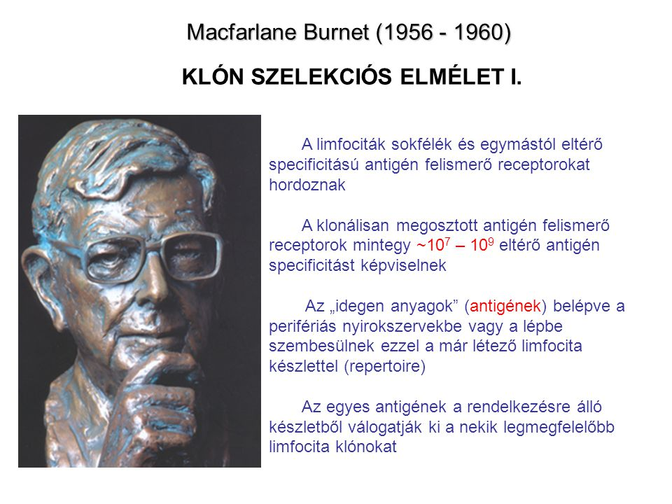 Macfarlane Burnet (1956 - 1960) Macfarlane Burnet (1956 - 1960) KLÓN SZELEKCIÓS ELMÉLET I. A limfociták sokfélék és egymástól eltérő specificitású ant