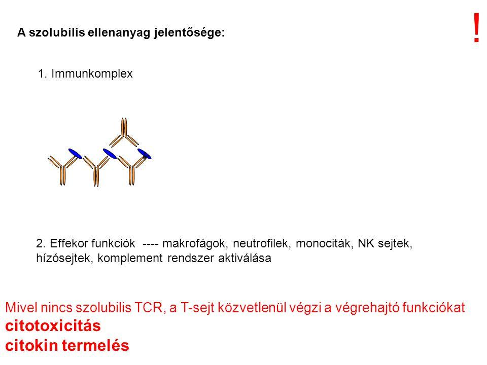 1. Immunkomplex v A szolubilis ellenanyag jelentősége: 2. Effekor funkciók ---- makrofágok, neutrofilek, monociták, NK sejtek, hízósejtek, komplement
