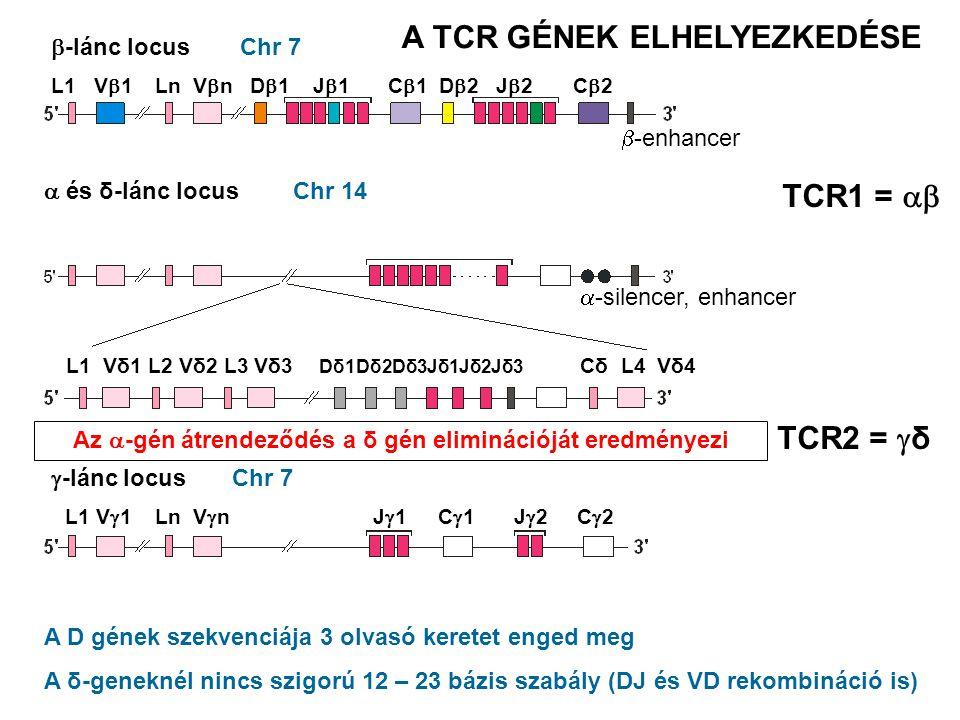 Chr 7 Chr 14  -lánc locus  és δ-lánc locus  -lánc locus Az  -gén átrendeződés a δ gén eliminációját eredményezi A D gének szekvenciája 3 olvasó ke