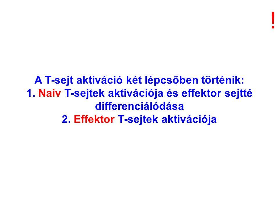 A T-sejt aktiváció két lépcsőben történik: 1. Naiv T-sejtek aktivációja és effektor sejtté differenciálódása 2. Effektor T-sejtek aktivációja !