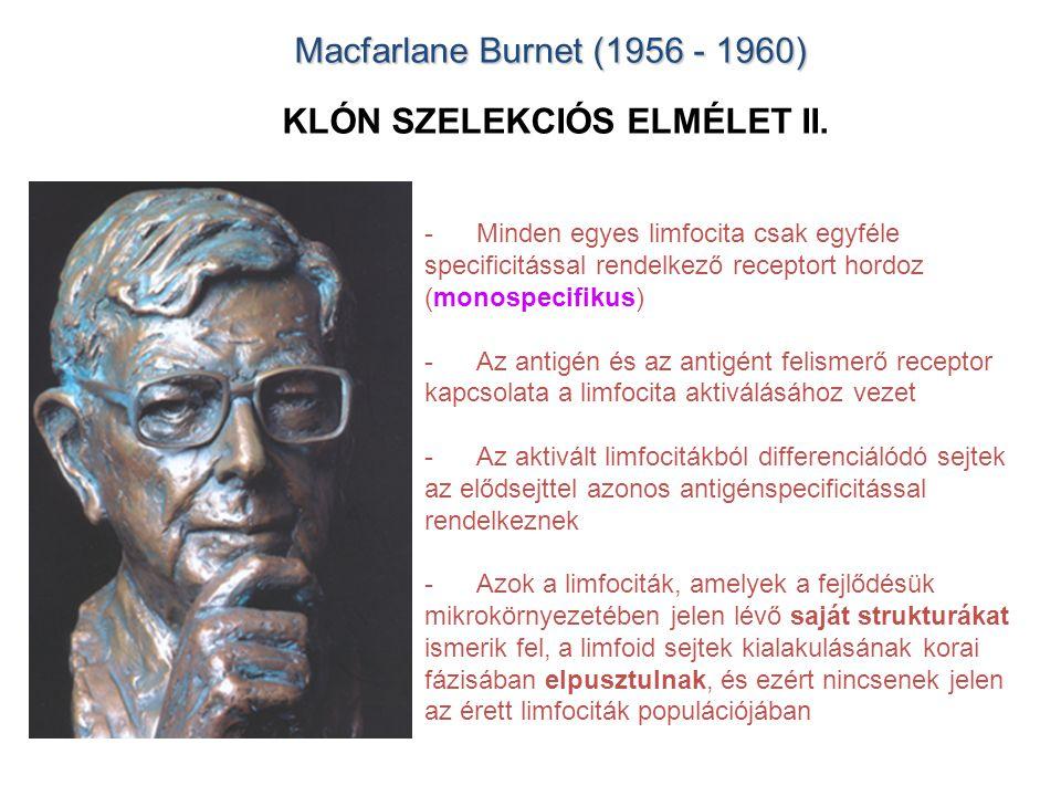 Macfarlane Burnet (1956 - 1960) Macfarlane Burnet (1956 - 1960) KLÓN SZELEKCIÓS ELMÉLET II. -Minden egyes limfocita csak egyféle specificitással rende