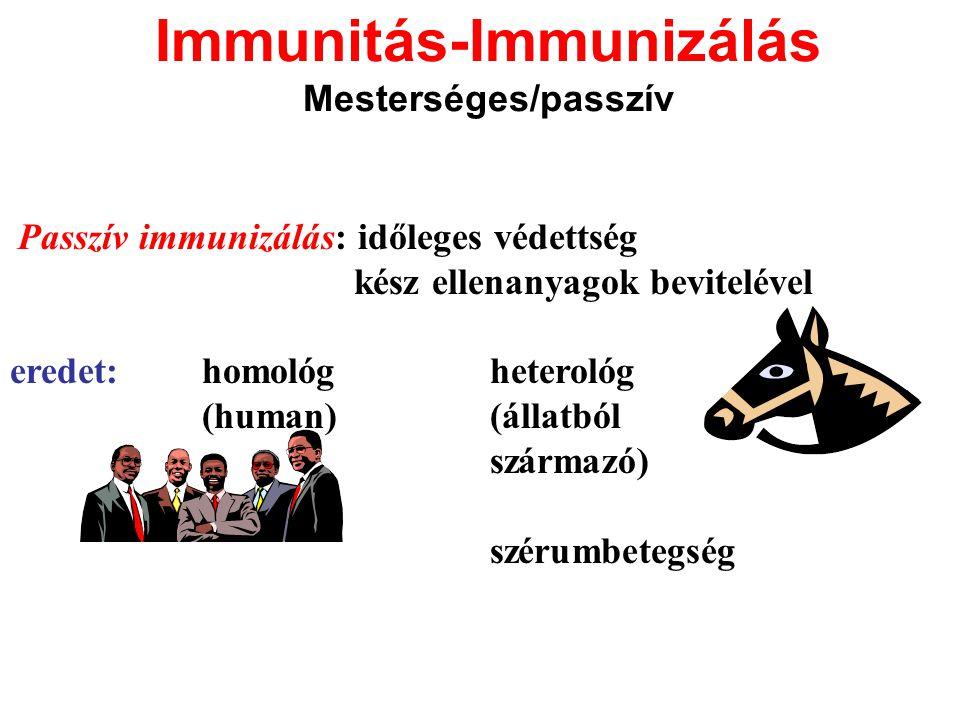 Immunitás-Immunizálás Mesterséges/passzív Passzív immunizálás: időleges védettség kész ellenanyagok bevitelével eredet:homológheterológ (human) (állat