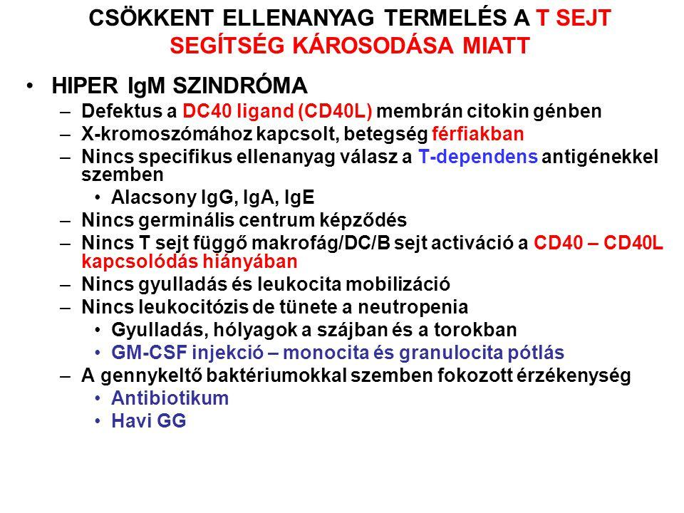 HIPER IgM SZINDRÓMA –Defektus a DC40 ligand (CD40L) membrán citokin génben –X-kromoszómához kapcsolt, betegség férfiakban –Nincs specifikus ellenanyag válasz a T-dependens antigénekkel szemben Alacsony IgG, IgA, IgE –Nincs germinális centrum képződés –Nincs T sejt függő makrofág/DC/B sejt activáció a CD40 – CD40L kapcsolódás hiányában –Nincs gyulladás és leukocita mobilizáció –Nincs leukocitózis de tünete a neutropenia Gyulladás, hólyagok a szájban és a torokban GM-CSF injekció – monocita és granulocita pótlás –A gennykeltő baktériumokkal szemben fokozott érzékenység Antibiotikum Havi GG CSÖKKENT ELLENANYAG TERMELÉS A T SEJT SEGÍTSÉG KÁROSODÁSA MIATT