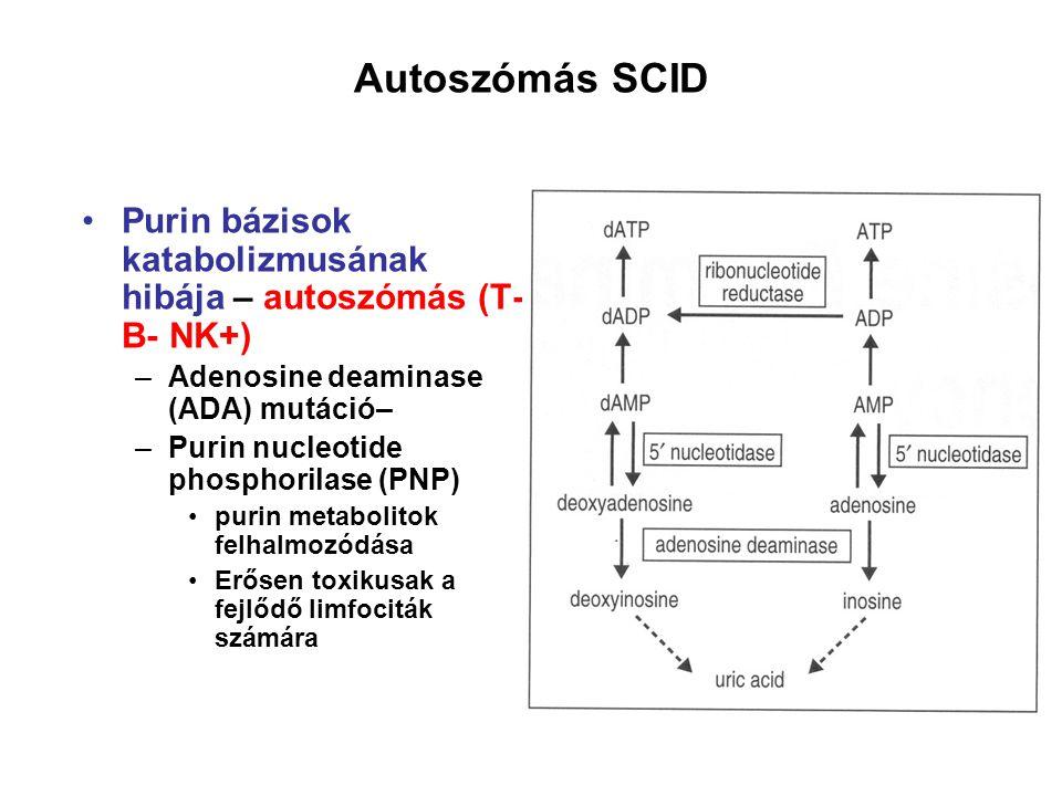 Purin bázisok katabolizmusának hibája – autoszómás (T- B- NK+) –Adenosine deaminase (ADA) mutáció– –Purin nucleotide phosphorilase (PNP) purin metabolitok felhalmozódása Erősen toxikusak a fejlődő limfociták számára Autoszómás SCID