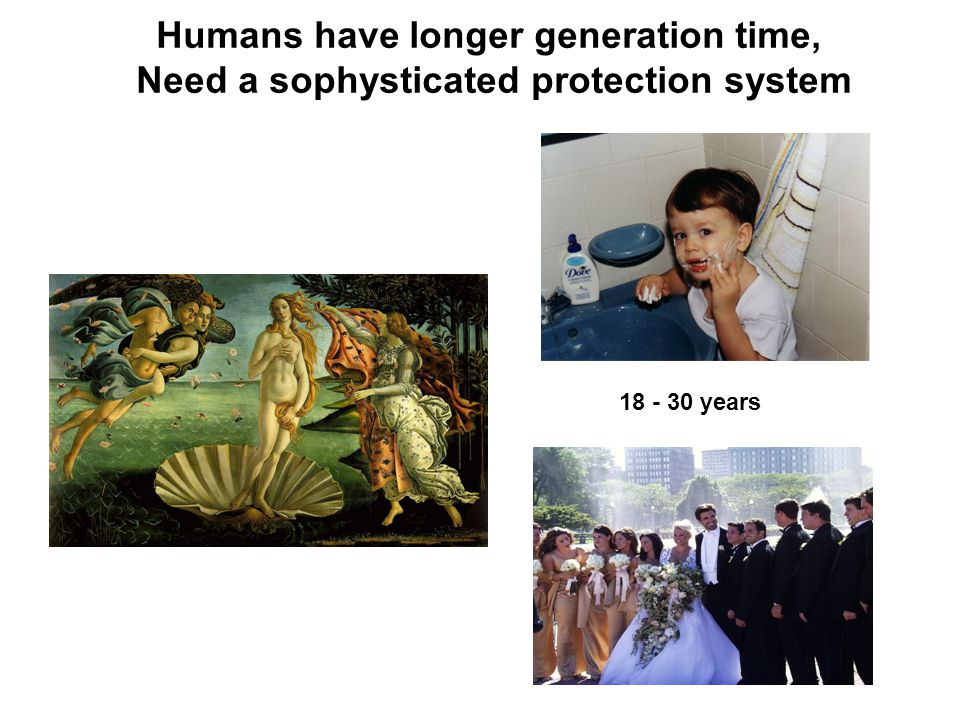 Humans have longer generation time, Need a sophysticated protection system years