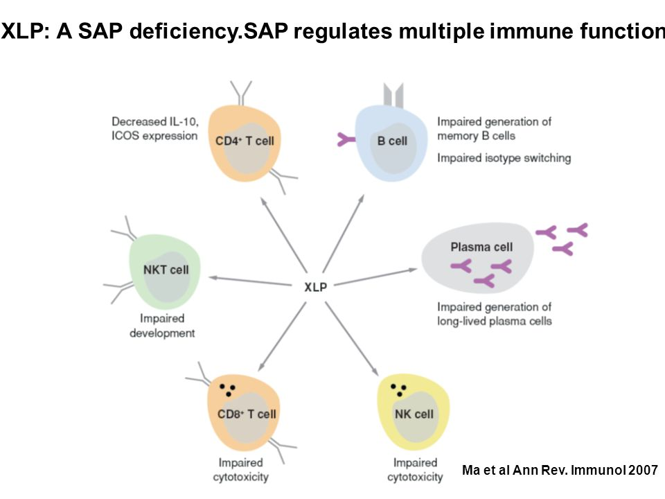 XLP: A SAP deficiency.SAP regulates multiple immune functions Ma et al Ann Rev. Immunol 2007