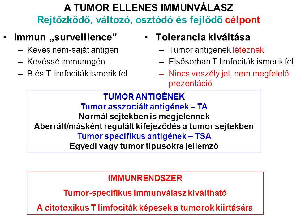 A TUMOR ANTIGÉNEK SZERKEZETE ÉS EREDETE MUTÁLT ONKOGÉNEK ÉS TUMOR SZUPPRESSZOR GÉNEK –Részt vesznek a transzformációban –Citoszólikus új detrminánsok – nem elsődleges célpontok –Celluláris proto-onkogének  onkogének Ras, p53, Abl Pont mutációk, deléció, kromoszóma transzlokáció, virális gén inszerció MÁS MUTÁLT GÉNEK – nem szükséges a transzformációhoz –A gazdasejt celluláris fehérjéi random mutációval képződő peptidjei –Egyedi tumor specifikus transzplantációs antigének TSTA KÓROSAN TÚL EXPRESSZÁLT NORMAL SEJT FEHÉRJÉK –Alacsony/ritka expresszió a normál sejtekben – az immunrendszer ignorálja –A korai sejt fejlődés során expresszálódik – az immunrendszer ignorálja ONKOGÉN VÍRUSOK ÁLTAL KÓDOLT TUMOR ANTIGÉNEK –Immunogén, közös virális fehérjék –DNS vírusok – Papova, Herpes, Papilloma –RNS vírusok – Retrovírusok HTLV ONKOFETALIS ANTIGÉNEK –A fejlődés során gátlódik a kifejeződésük  tumor sejtekben felszabadult gátlás –Tumor markerek – karcinoembrionális antigének CEA, karcinoma specifikus –Alfa-fetoprotein AFP, hepatocelluláris karcinoma MEGVÁLTOZOTT GLIKOLIPIDEK –Gangliozid, vércsoporthoz kapcsolódó szénhidrátok, mucin SZÖVET SPECIFIKUS DIFFERENCIÁCIÓS ANTIGÉNEK –CD10/CALLA Common Acute Lymphoid Leukemia Antigen –Melanoma antigének