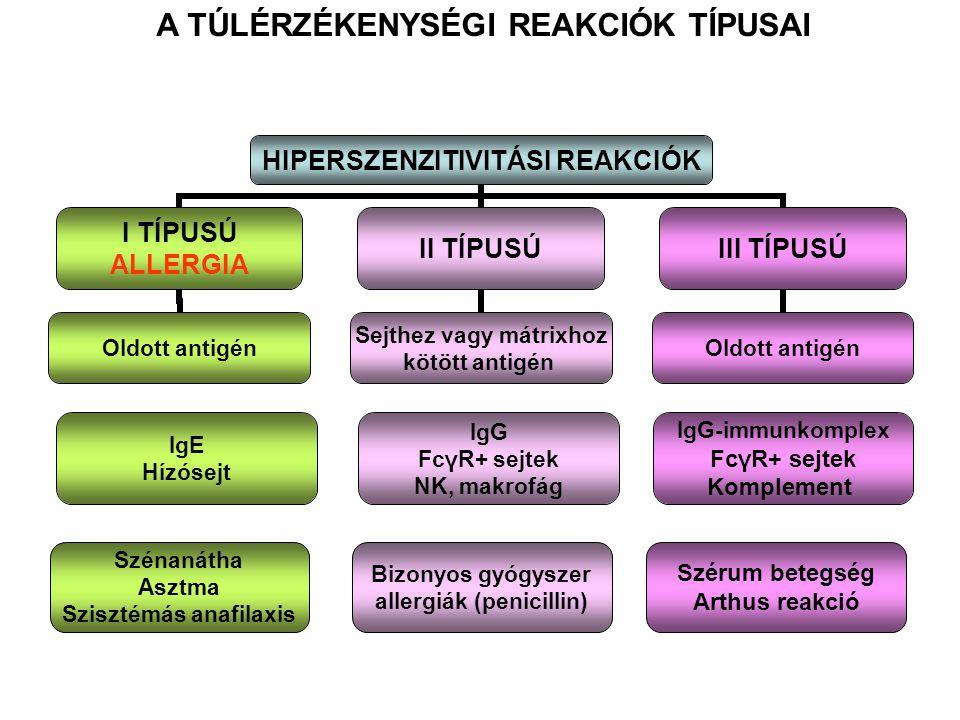 A TÚLÉRZÉKENYSÉGI REAKCIÓK TÍPUSAI IgE Hízósejt IgG FcγR+ sejtek NK, makrofág IgG-immunkomplex FcγR+ sejtek Komplement Szénanátha Asztma Szisztémás anafilaxis Bizonyos gyógyszer allergiák (penicillin) Szérum betegség Arthus reakció
