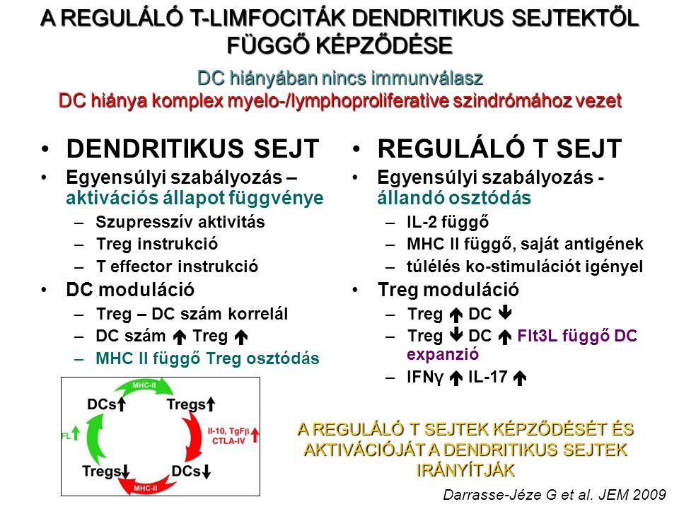 A REGULÁLÓ T-LIMFOCITÁK DENDRITIKUS SEJTEKTŐL FÜGGŐ KÉPZŐDÉSE DENDRITIKUS SEJT Egyensúlyi szabályozás – aktivációs állapot függvénye –Szupresszív aktivitás –Treg instrukció –T effector instrukció DC moduláció –Treg – DC szám korrelál –DC szám  Treg  –MHC II függő Treg osztódás REGULÁLÓ T SEJT Egyensúlyi szabályozás - állandó osztódás –IL-2 függő –MHC II függő, saját antigének –túlélés ko-stimulációt igényel Treg moduláció –Treg  DC  –Treg  DC  Flt3L függő DC expanzió –IFNγ  IL-17  DC hiányában nincs immunválasz DC hiánya komplex myelo-/lymphoproliferative szindrómához vezet A REGULÁLÓ T SEJTEK KÉPZŐDÉSÉT ÉS AKTIVÁCIÓJÁT A DENDRITIKUS SEJTEK IRÁNYÍTJÁK Darrasse-Jéze G et al.
