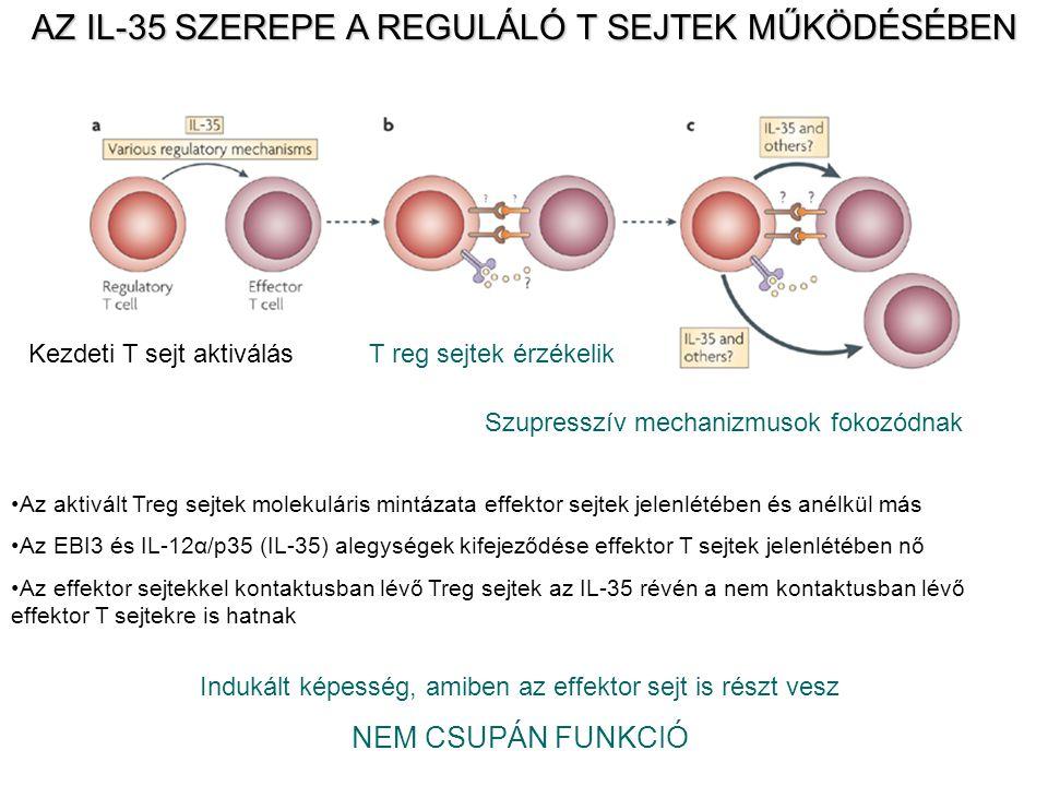 AZ IL-35 SZEREPE A REGULÁLÓ T SEJTEK MŰKÖDÉSÉBEN Indukált képesség, amiben az effektor sejt is részt vesz NEM CSUPÁN FUNKCIÓ Az aktivált Treg sejtek molekuláris mintázata effektor sejtek jelenlétében és anélkül más Az EBI3 és IL-12α/p35 (IL-35) alegységek kifejeződése effektor T sejtek jelenlétében nő Az effektor sejtekkel kontaktusban lévő Treg sejtek az IL-35 révén a nem kontaktusban lévő effektor T sejtekre is hatnak Kezdeti T sejt aktiválásT reg sejtek érzékelik Szupresszív mechanizmusok fokozódnak