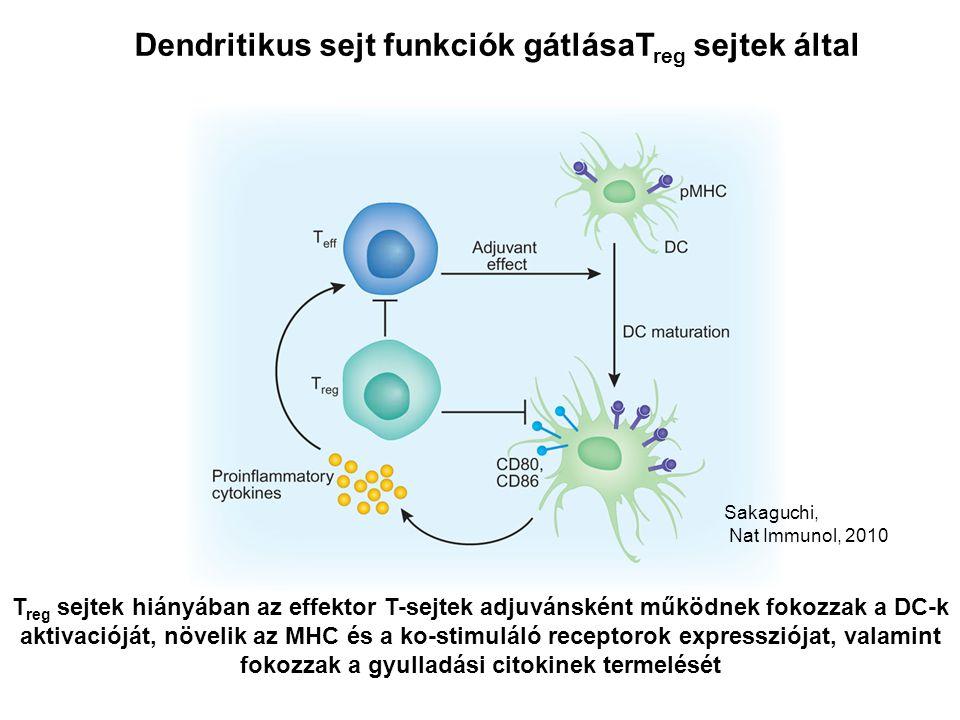 Dendritikus sejt funkciók gátlásaT reg sejtek által Sakaguchi, Nat Immunol, 2010 T reg sejtek hiányában az effektor T-sejtek adjuvánsként működnek fokozzak a DC-k aktivacióját, növelik az MHC és a ko-stimuláló receptorok expressziójat, valamint fokozzak a gyulladási citokinek termelését