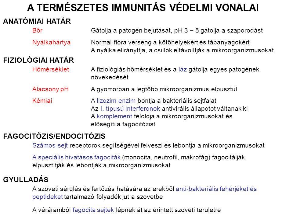 AZ EPITÉLIUM FONTOS ELSŐDLEGES VÉDELMI VONAL A fertőzéssel szembeni védelmi mechanizmusok MECHANIKAI KÉMIAI MIKROBIOLÓGIAI Az epitél sejtek szoros kapcsolata A levegő és folyadék hosszanti áramlása A nyálka mozgása a csillók által Zsírsavak Enzimek: lizozim (nyál, izzadság, könny), pepszin (bél) Alacsony pH (gyomor) Antibakteriális peptidek: defenzinek (bőr, bél) kriptidinek (vékonybél) A normál mikrobiális flóra verseng a tápanyagokért (laktoferrin) és a kötőhelyekért, de anti-bakteriális anyagokat is termelnek EPITÉL SEJTEK