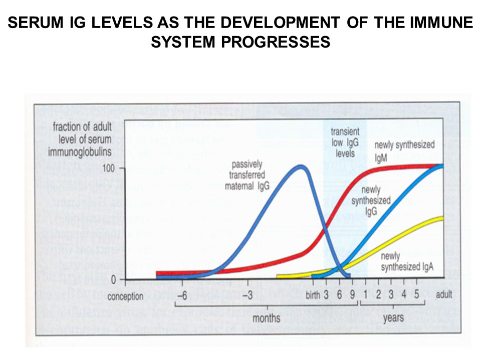 SERUM IG LEVELS AS THE DEVELOPMENT OF THE IMMUNE SYSTEM PROGRESSES