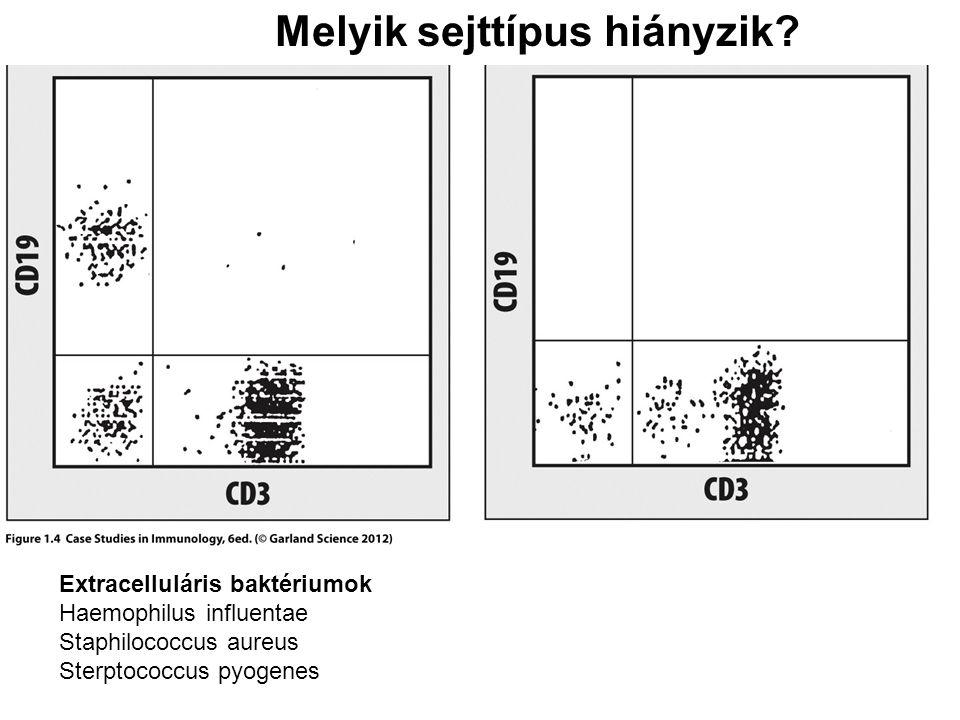 Melyik sejttípus hiányzik? Extracelluláris baktériumok Haemophilus influentae Staphilococcus aureus Sterptococcus pyogenes