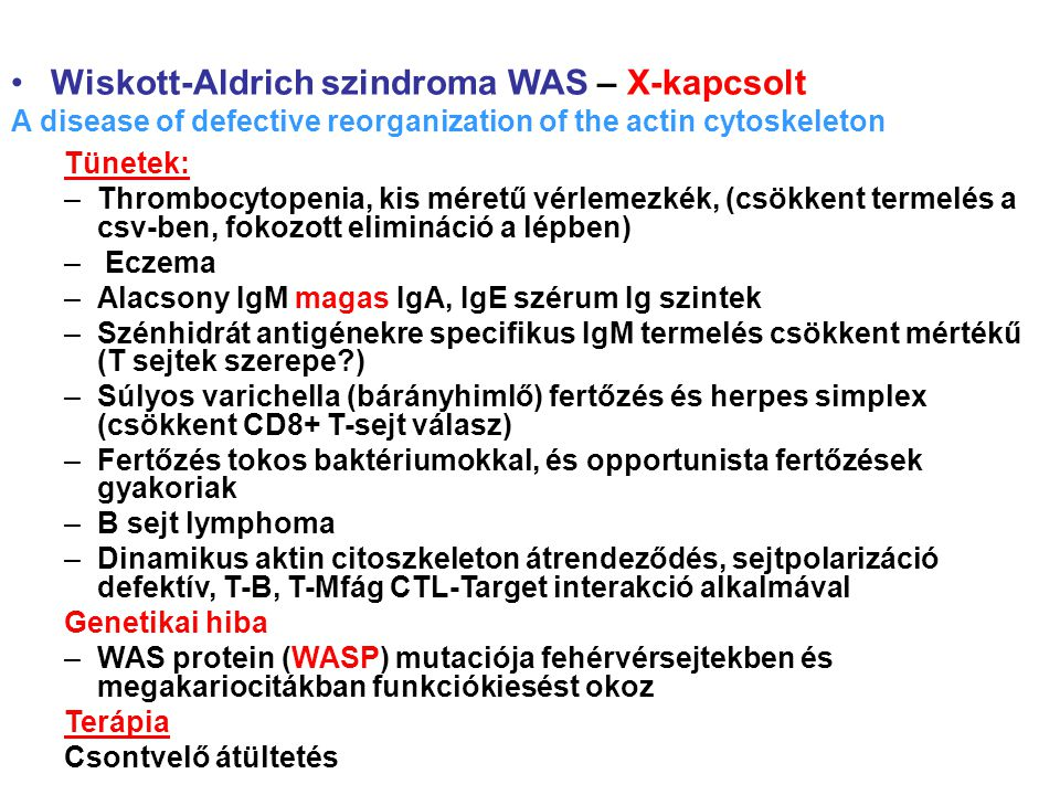 Wiskott-Aldrich szindroma WAS – X-kapcsolt A disease of defective reorganization of the actin cytoskeleton Tünetek: –Thrombocytopenia, kis méretű vérl