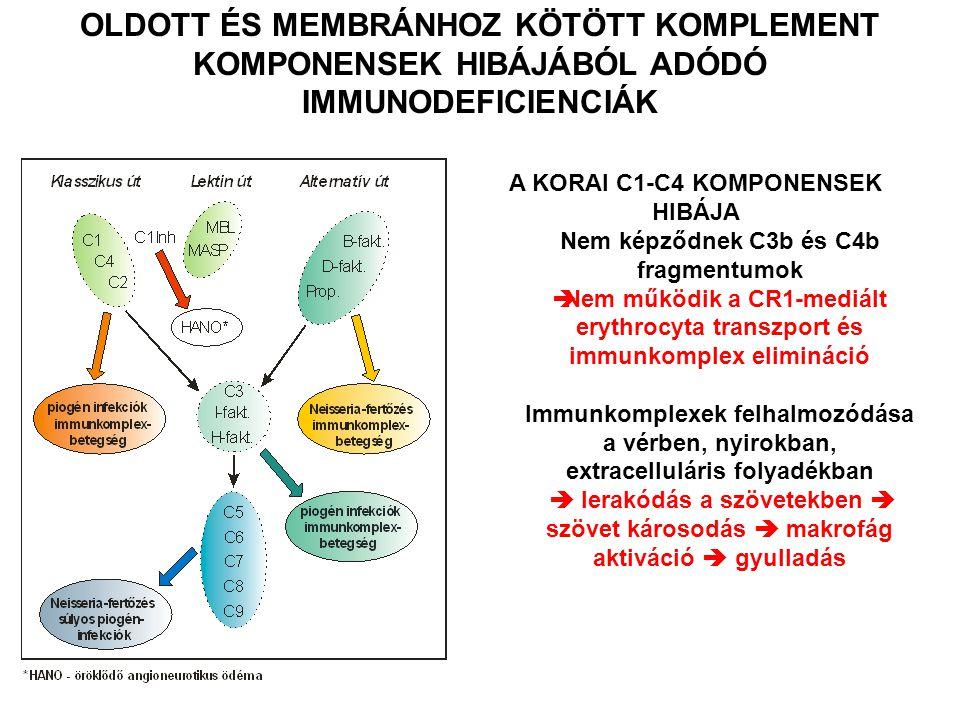 A KORAI C1-C4 KOMPONENSEK HIBÁJA Nem képződnek C3b és C4b fragmentumok  Nem működik a CR1-mediált erythrocyta transzport és immunkomplex elimináció I