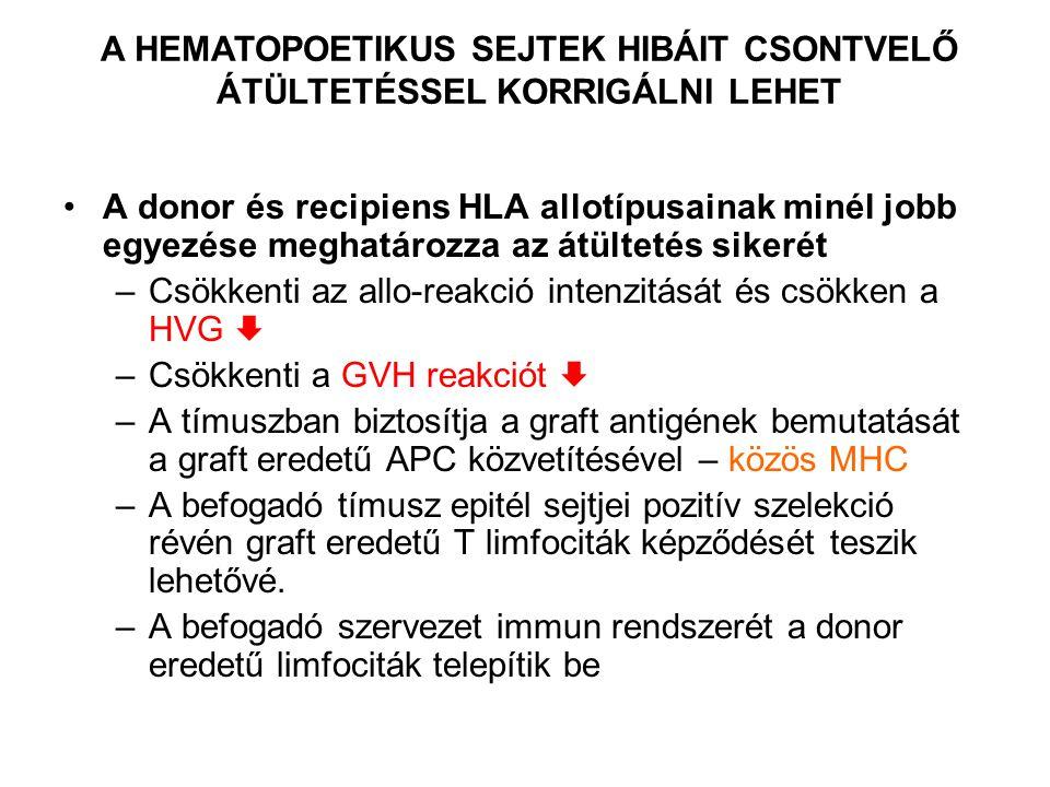 A donor és recipiens HLA allotípusainak minél jobb egyezése meghatározza az átültetés sikerét –Csökkenti az allo-reakció intenzitását és csökken a HVG