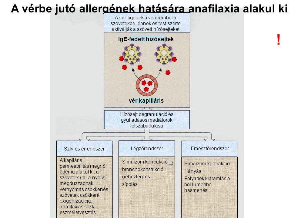 A vérbe jutó allergének hatására anafilaxia alakul ki Az antigének a véráramból a szövetekbe lépnek és test szerte aktiválják a szöveti hízósejteket H