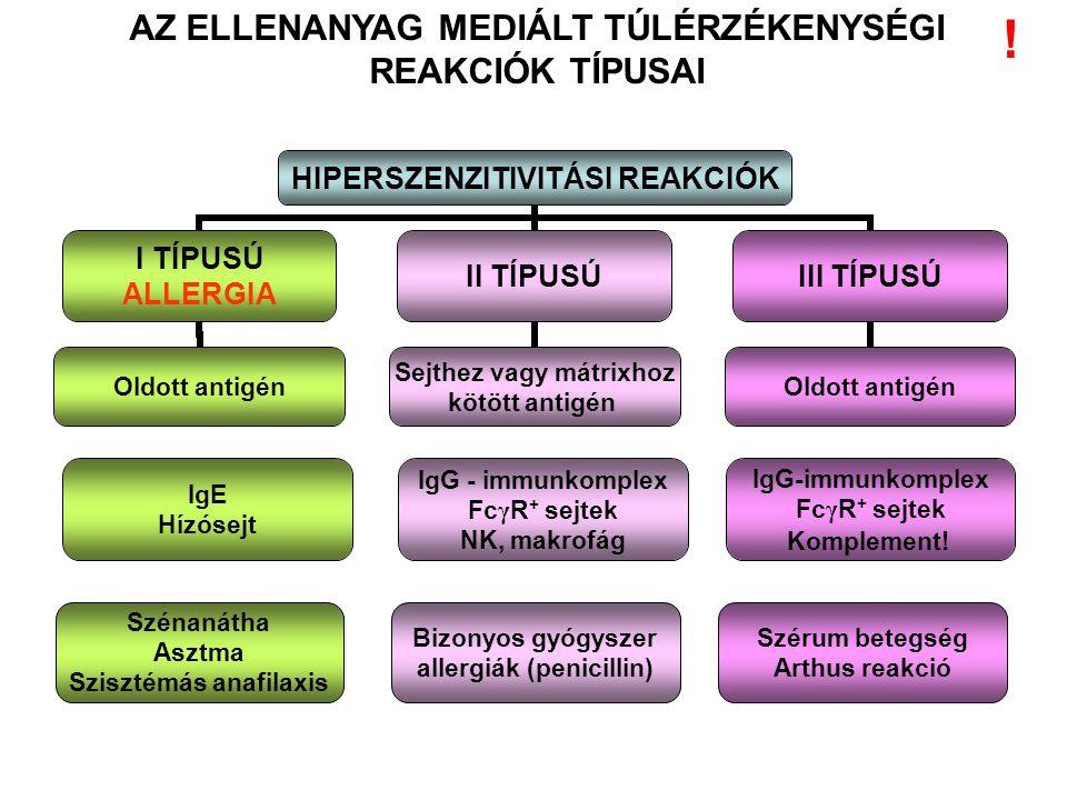 AZ ELLENANYAG MEDIÁLT TÚLÉRZÉKENYSÉGI REAKCIÓK TÍPUSAI IgE Hízósejt IgG - immunkomplex Fc γ R + sejtek NK, makrofág IgG-immunkomplex Fc γ R + sejtek K
