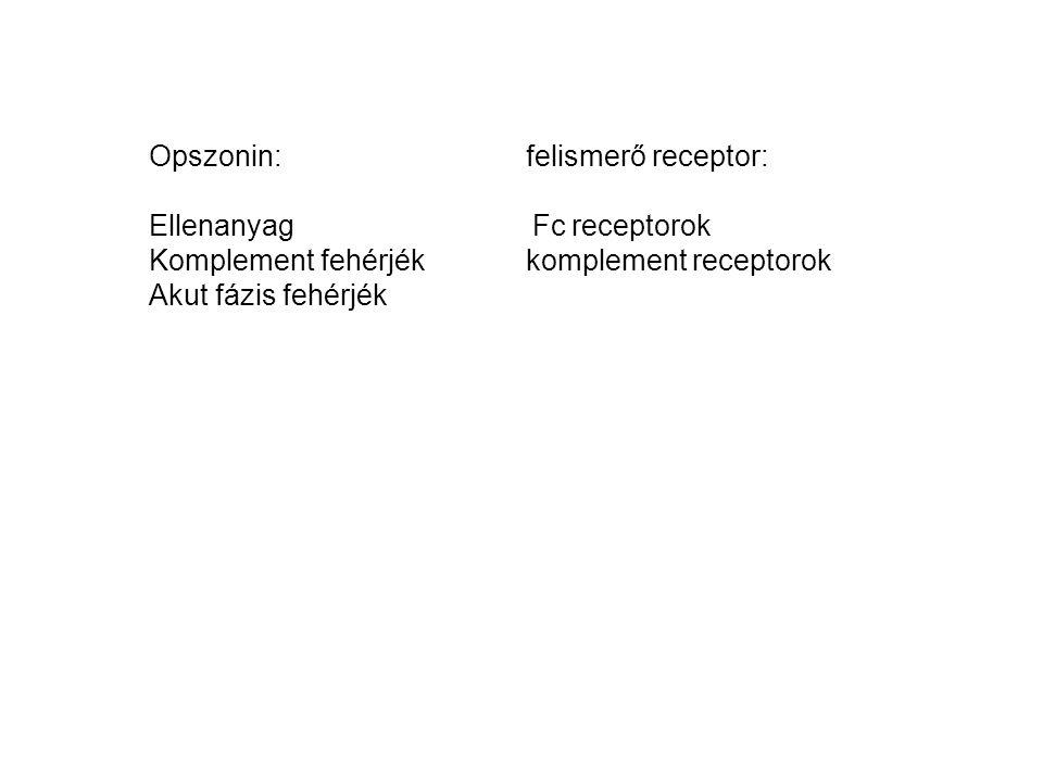 Opszonin: felismerő receptor: Ellenanyag Fc receptorok Komplement fehérjék komplement receptorok Akut fázis fehérjék