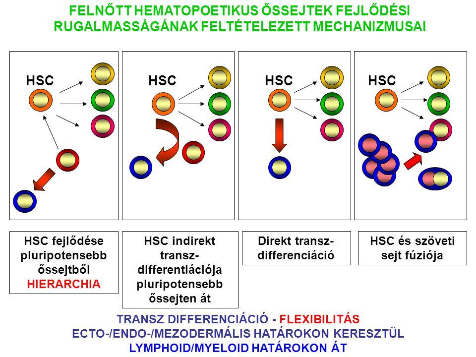 HSC fejlődése pluripotensebb őssejtből HIERARCHIA FELNŐTT HEMATOPOETIKUS ŐSSEJTEK FEJLŐDÉSI RUGALMASSÁGÁNAK FELTÉTELEZETT MECHANIZMUSAI HSC HSC indire