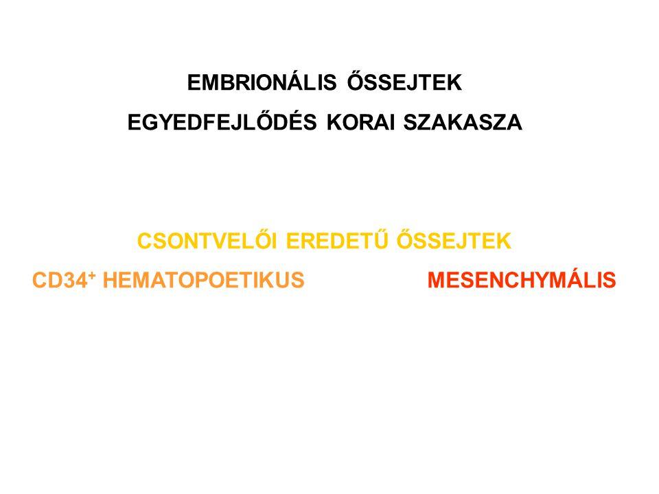 EMBRIONÁLIS ŐSSEJTEK EGYEDFEJLŐDÉS KORAI SZAKASZA CSONTVELŐI EREDETŰ ŐSSEJTEK CD34 + HEMATOPOETIKUSMESENCHYMÁLIS
