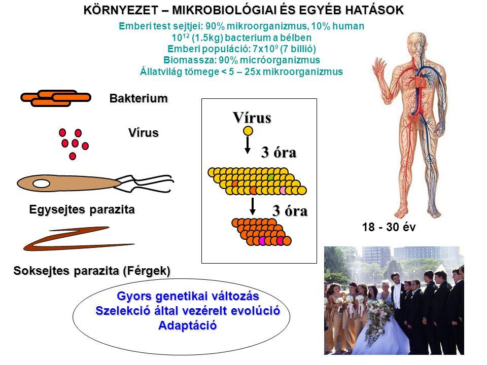 Bakterium Vírus Soksejtes parazita (Férgek) Egysejtes parazita Gyors genetikai változás Szelekció által vezérelt evolúció Adaptáció KÖRNYEZET – MIKROB