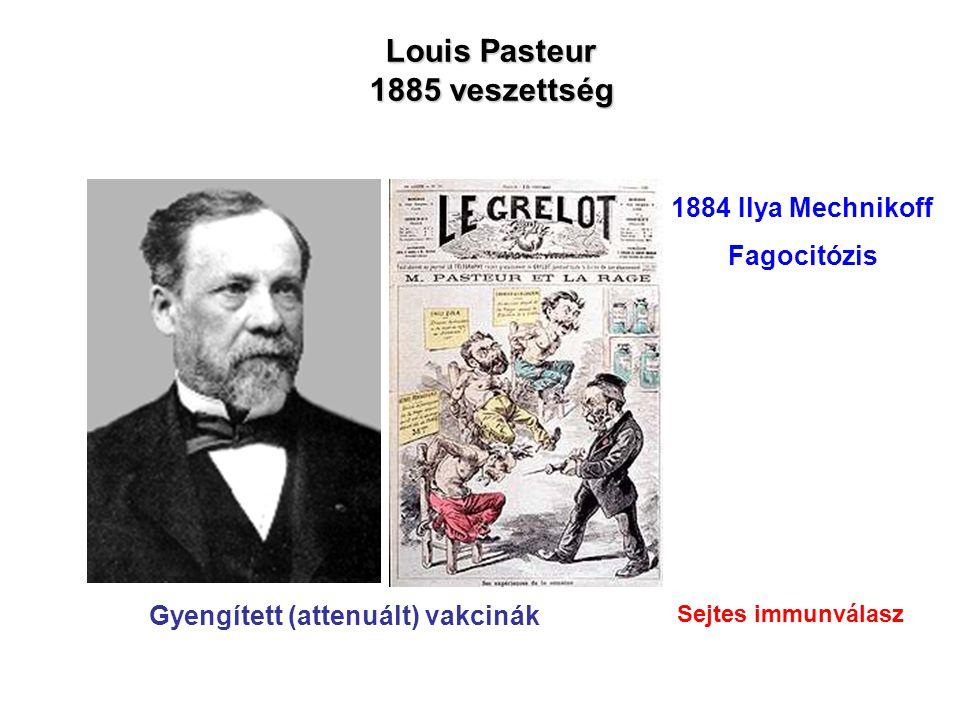 Robert Koch Laboratórium Berlin 1890 Emil Behring Shimbasaru Kitasato 1.Sok betegség csak egyszer kapható el (védettség) 2.Egyes fertőző betegségek vakcinációval megelőzhetők 3.A vér anti-bakteriális aktivitással rendelkezik (anti-toxinok, szérum terápia) 1897 Paul Ehrlich Növényi toxinok: ricin, ebrin Richard Pfeiffer Tífusz és kolera toxin HUMORÁLIS IMMUNVÁLASZ Humorális faktorok