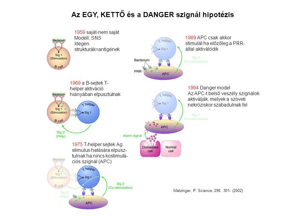 Az EGY, KETTŐ és a DANGER szignál hipotézis 1959 saját-nem saját Modell, SNS Idegen strukturák=antigének 1969 a B-sejtek T- helper aktiváció hiányában elpusztulnak 1975 T-helper sejtek Ag.