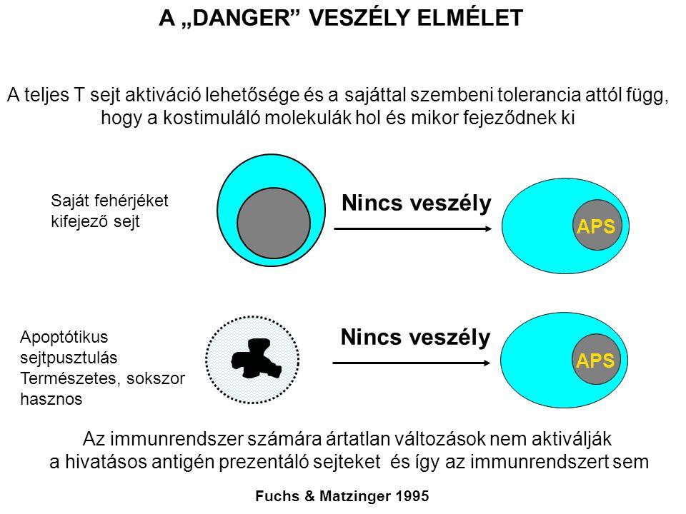 """A """"DANGER VESZÉLY ELMÉLET Fuchs & Matzinger 1995 A teljes T sejt aktiváció lehetősége és a sajáttal szembeni tolerancia attól függ, hogy a kostimuláló molekulák hol és mikor fejeződnek ki Apoptótikus sejtpusztulás Természetes, sokszor hasznos APS Nincs veszély Saját fehérjéket kifejező sejt Az immunrendszer számára ártatlan változások nem aktiválják a hivatásos antigén prezentáló sejteket és így az immunrendszert sem"""