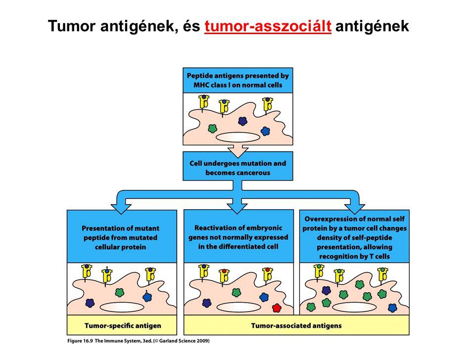 Tumor antigének, és tumor-asszociált antigének