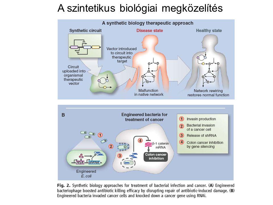A szintetikus biológiai megközelítés