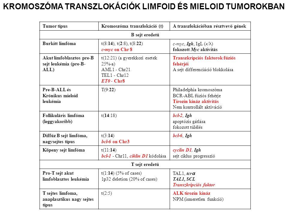 Tumor típusKromoszóma transzlokáció (t)A transzlokációban résztvevő gének B sejt eredetű Burkitt limfómat(8:14), t(2:8), t(8:22) c-myc on Chr 8 c-myc,