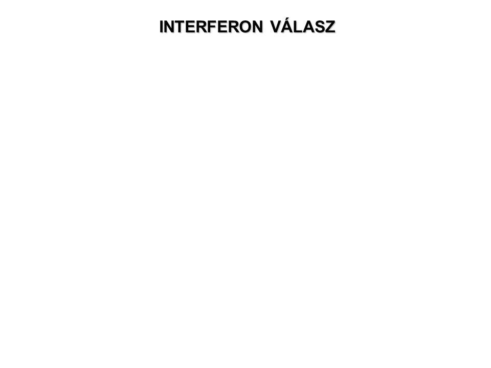 INTERFERON VÁLASZ
