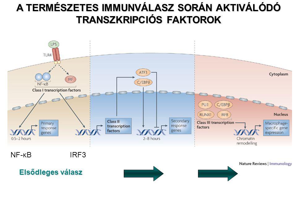 NF-κBIRF3 A TERMÉSZETES IMMUNVÁLASZ SORÁN AKTIVÁLÓDÓ TRANSZKRIPCIÓS FAKTOROK Elsődleges válasz
