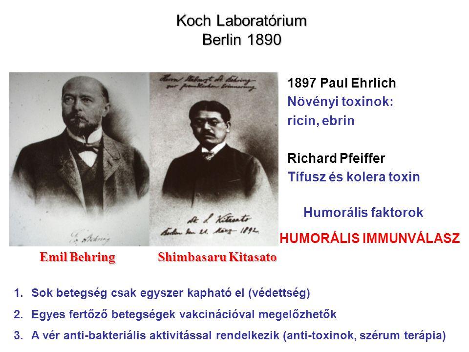 Koch Laboratórium Berlin 1890 Emil Behring Shimbasaru Kitasato 1.Sok betegség csak egyszer kapható el (védettség) 2.Egyes fertőző betegségek vakcináci
