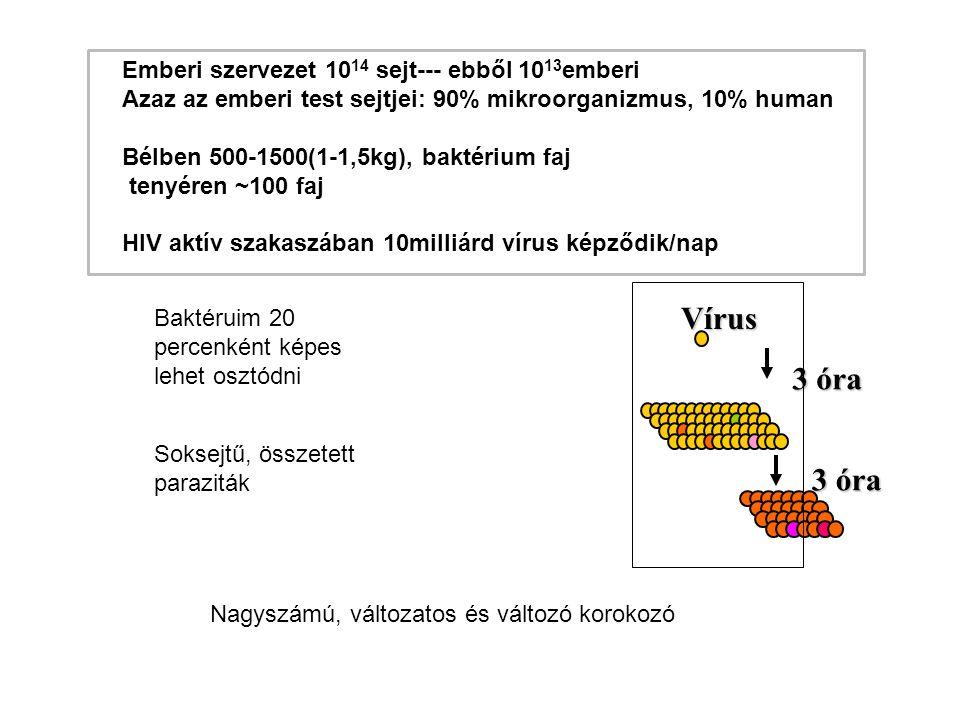 Emberi szervezet 10 14 sejt--- ebből 10 13 emberi Azaz az emberi test sejtjei: 90% mikroorganizmus, 10% human Bélben 500-1500(1-1,5kg), baktérium faj tenyéren ~100 faj HIV aktív szakaszában 10milliárd vírus képződik/nap Nagyszámú, változatos és változó korokozó Vírus 3 óra Baktéruim 20 percenként képes lehet osztódni Soksejtű, összetett paraziták