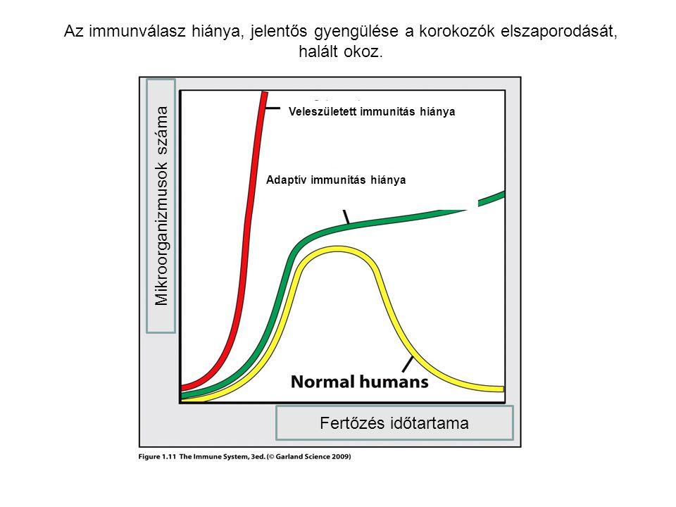 AZ IMMUNOLÓGIAI VÉDELEM KÉT TÍPUSA VELESZÜLETETT/TERMÉSZETES IMMUNITÁS Olyan komponensek alkotják, melyek a fertőzések elleni védelmet előzetes aktiváció és sejtosztódás nélkül biztosítják Olyan komponensek alkotják, melyek a fertőzések elleni védelmet előzetes aktiváció és sejtosztódás nélkül biztosítják SZERZETT/ADAPTÍV IMMUNITÁS A kórokozók elleni védelem kialakulásához sejt aktivációt és klonális osztódást igényel Első védelmi vonal Öröklött, mindig jelen van Gyors válasz Rövid idejű védelem Antigén-specifikus aktiváció váltja ki A válaszadási képesség genetikailag szabályozott Környezeti hatásoktól függ !