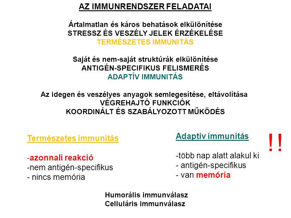 MIELOID ELŐALAK LIMFOID ELŐALAK CSONTVELŐ HSC – önmegújító képességHSC TÍMUSZ monocitagranulocitahízósejt NYIROK, NYIROK SZERVEK B-sejtT-sejtNK-sejt B-sejtT-sejt VÉR AZ IMMUNRENDSZER SEJTJEINEK KIALAKULÁSA HEMATOPOETIKUS ŐSSEJTEKBŐL (HSC) HSC – hematopoetikus őssejt .