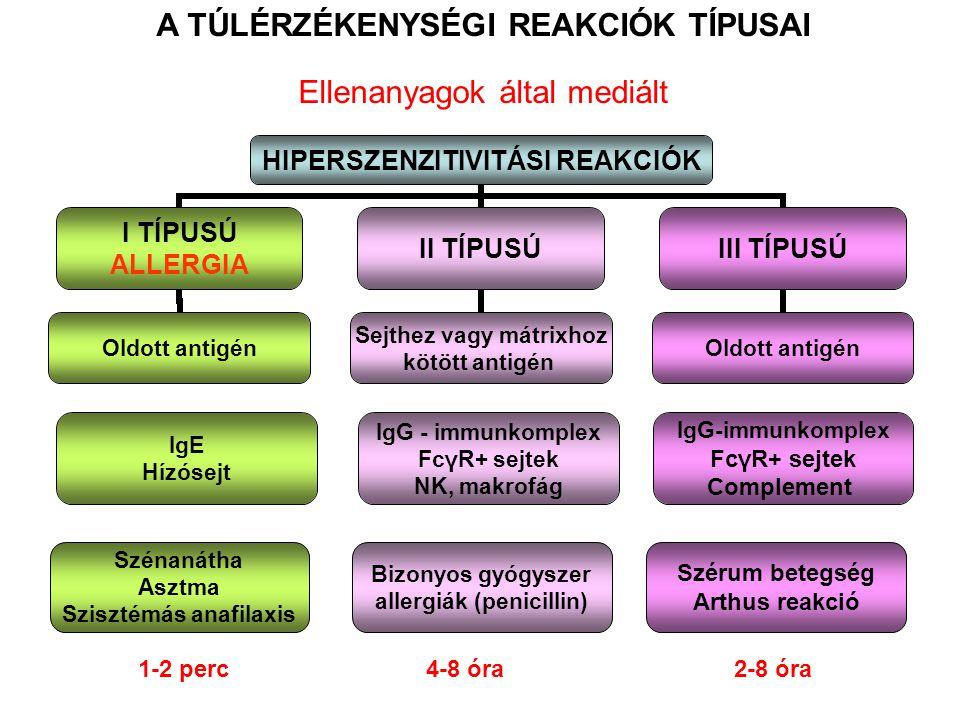 A TÚLÉRZÉKENYSÉGI REAKCIÓK TÍPUSAI Ellenanyagok által mediált IgE Hízósejt IgG - immunkomplex FcγR+ sejtek NK, makrofág IgG-immunkomplex FcγR+ sejtek