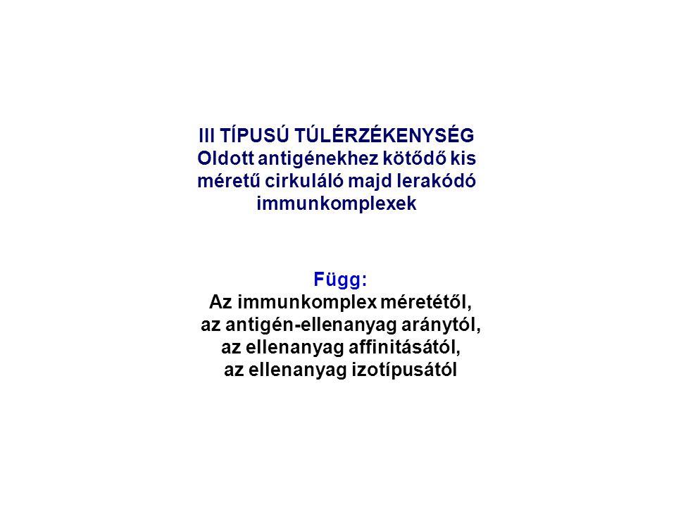 III TÍPUSÚ TÚLÉRZÉKENYSÉG Oldott antigénekhez kötődő kis méretű cirkuláló majd lerakódó immunkomplexek Függ: Az immunkomplex méretétől, az antigén-ell