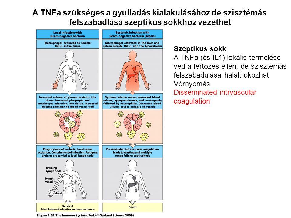 A TNFa szükséges a gyulladás kialakulásához de szisztémás felszabadlása szeptikus sokkhoz vezethet Szeptikus sokk A TNFα (és IL1) lokális termelése vé