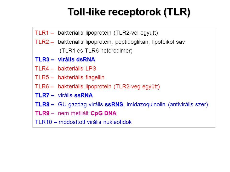 TLR1 – bakteriális lipoprotein (TLR2-vel együtt) TLR2 –bakteriális lipoprotein, peptidoglikán, lipoteikol sav (TLR1 és TLR6 heterodimer) TLR3 –virális dsRNA TLR4 – bakteriális LPS TLR5 – bakteriális flagellin TLR6 –bakteriális lipoprotein (TLR2-veg együtt) TLR7 –ssRNA TLR7 – virális ssRNA TLR8 –ssRNS TLR8 – GU gazdag virális ssRNS, imidazoquinolin (antivirális szer) TLR9CpG DNA TLR9 – nem metilált CpG DNA TLR10 – módosított virális nukleotidok Toll-like receptorok (TLR)