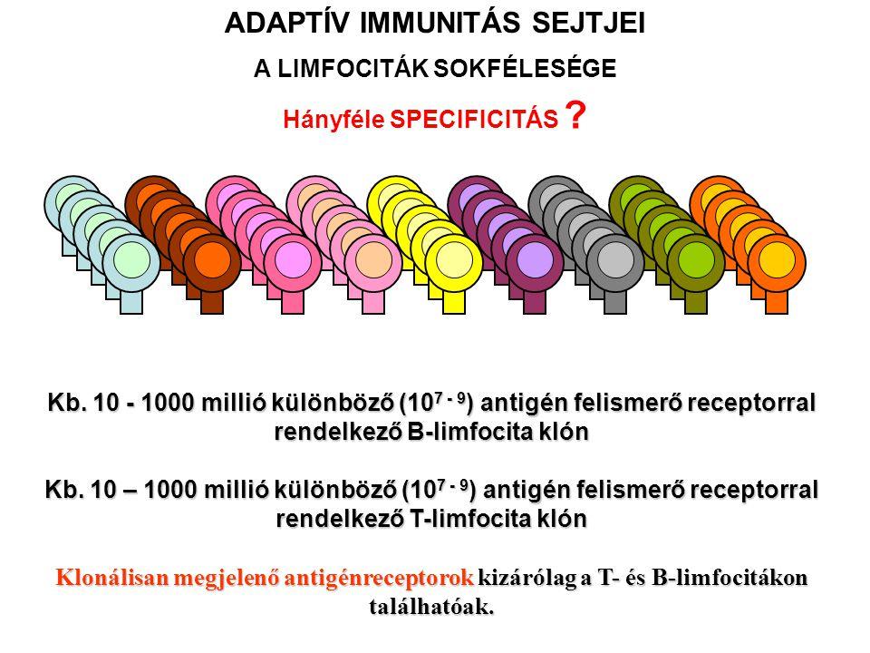 Kb. 10 - 1000 millió különböző (10 7 - 9 ) antigén felismerő receptorral rendelkező B-limfocita klón Kb. 10 – 1000 millió különböző (10 7 - 9 ) antigé