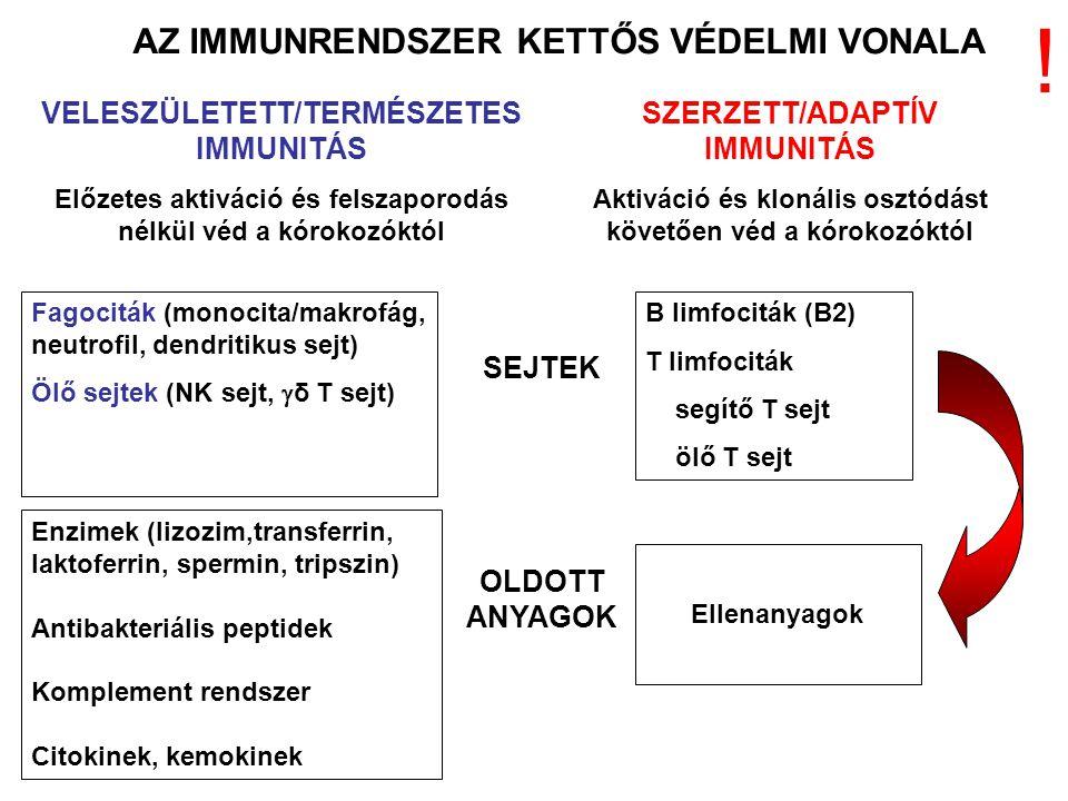 AZ IMMUNRENDSZER KETTŐS VÉDELMI VONALA VELESZÜLETETT/TERMÉSZETES IMMUNITÁS Előzetes aktiváció és felszaporodás nélkül véd a kórokozóktól SZERZETT/ADAPTÍV IMMUNITÁS Aktiváció és klonális osztódást követően véd a kórokozóktól SEJTEK OLDOTT ANYAGOK Fagociták (monocita/makrofág, neutrofil, dendritikus sejt) Ölő sejtek (NK sejt,  δ T sejt) B limfociták (B2) T limfociták segítő T sejt ölő T sejt Enzimek (lizozim,transferrin, laktoferrin, spermin, tripszin) Antibakteriális peptidek Komplement rendszer Citokinek, kemokinek Ellenanyagok !