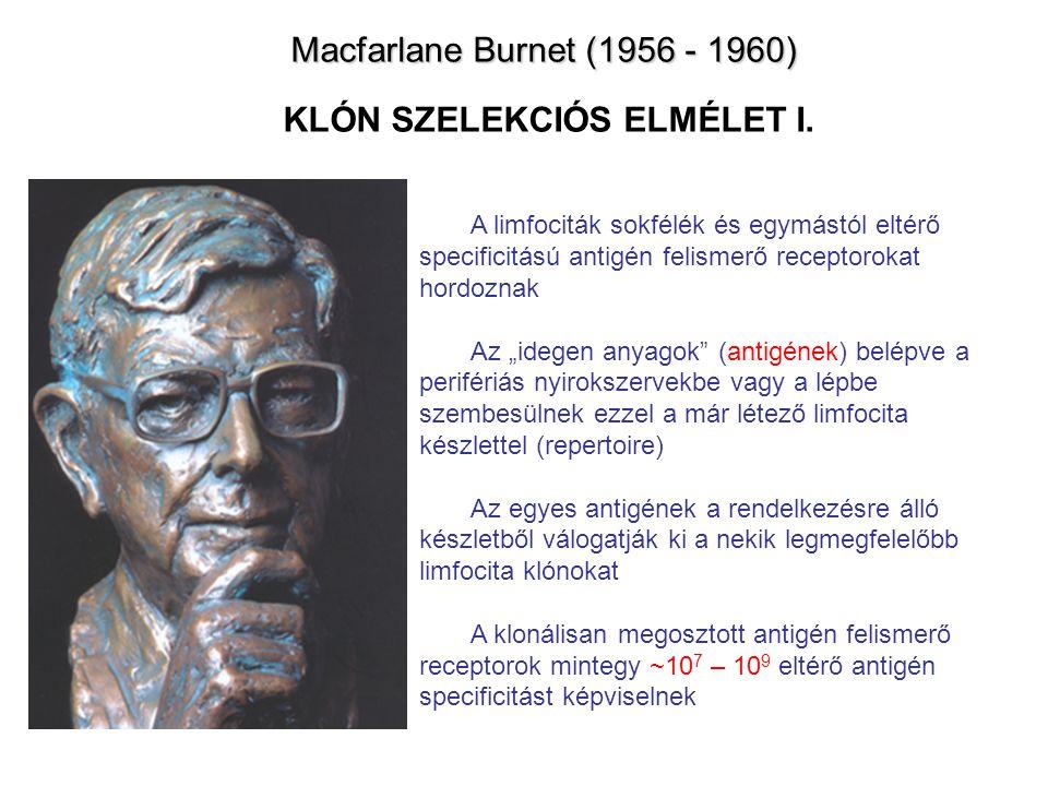 Macfarlane Burnet (1956 - 1960) Macfarlane Burnet (1956 - 1960) KLÓN SZELEKCIÓS ELMÉLET I.